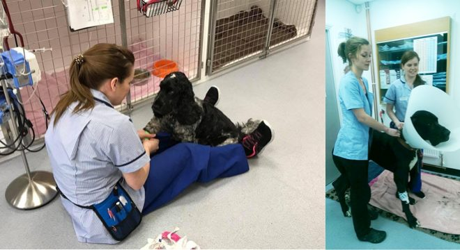 Life as a trainee Veterinary Nurse