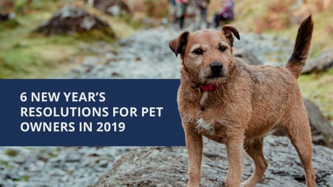 6 New Year's Resolutions for Pet Owners in 2019